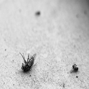 Different kinds of pest control procedures